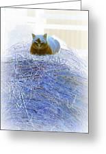 Kitty Blue IIi Greeting Card