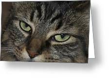 Kitty Cat Eyes Greeting Card