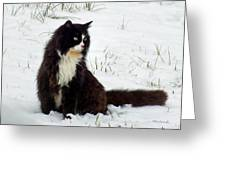 Kitty Cat In The Snow Greeting Card