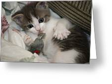 Kitty Claws Greeting Card
