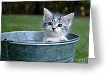 Kitty In A Bucket Greeting Card
