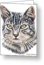 Kitty Kat Iphone Cases Smart Phones Cells And Mobile Cases Carole Spandau Cbs Art 337 Greeting Card