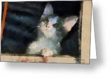 Kitty Photo Art 05 Greeting Card
