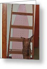 Kitty Scores A Perfect Ten Greeting Card