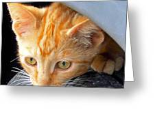 Kitty Under The Hood Greeting Card