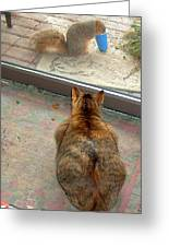 Kitty Watches The Squirrel Greeting Card