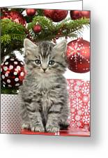 Kitty Xmas Present Greeting Card
