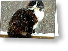 Kittycat In The Snow On The Fence Greeting Card