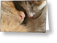 Kity Kat Love Greeting Card