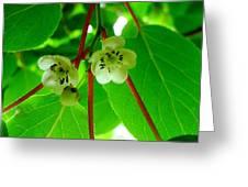 Kiwi Flowers Greeting Card