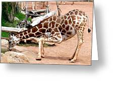 Kneeling Giraffe Greeting Card