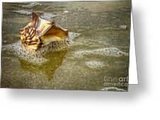 Knobbed Whelk 10 Botany Bay Greeting Card