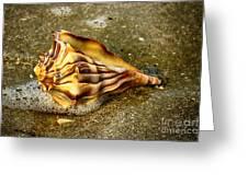 Knobbed Whelk 9 Botany Bay Greeting Card
