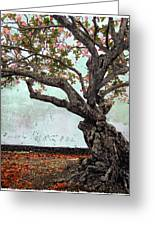 Knotted Tree Greeting Card