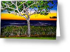 Ko Olina Tree In Sunset Greeting Card