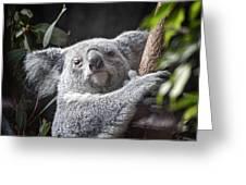 Koala Bear Greeting Card by Tom Mc Nemar