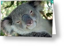 Koala Face Greeting Card