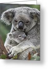 Koala Mother Holding Joey Australia Greeting Card