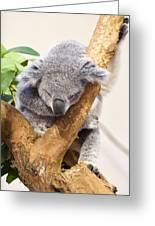 Koala Sleeping  Greeting Card