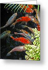 Koi Fish I Greeting Card