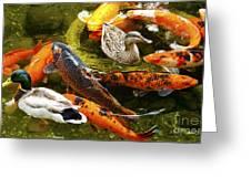Koi Fish In Pond Swimming With Two Mallard Ducks Greeting Card