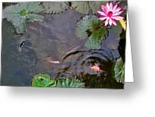 Koi. Lotus. Phu Quoc. Vietnam. Greeting Card