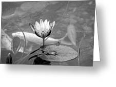 Koi Pond With Lily Pad And Flower Black And White Greeting Card