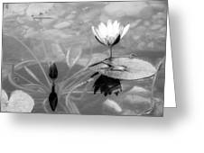 Koi Pond With Lily Pad Flower And Bud Black And White Greeting Card