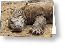 Komodo Dragon Male Basking Komodo Island Greeting Card