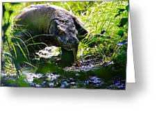 Komodo Island 1 Greeting Card
