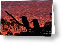 Kookaburras At Sunset Greeting Card