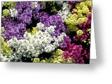Many Colors Make A Beautiful Garden Greeting Card