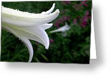 Korean Lily Greeting Card
