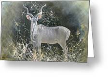 Kudu Bull Greeting Card