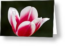 Keukenhof 14002 Greeting Card