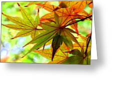 Kyoto's Beauty Of Autumn Greeting Card