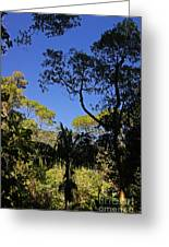 jungle in La Amistad National Park Panama 1 Greeting Card