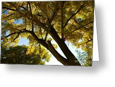 La Boca Ranch Cottonwood Greeting Card