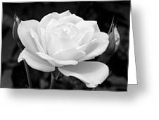 La Rosa In Black And White Greeting Card