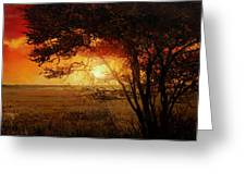 La Savana Al Tramonto Greeting Card