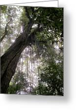 La Tigra Rainforest Canopy Greeting Card