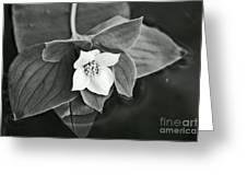 La Vie En Noir Et Blanc Greeting Card