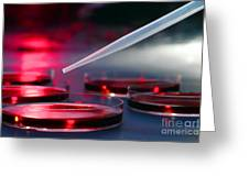 Laboratory Experiment In Science Research Lab Greeting Card