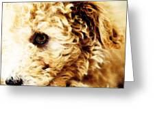 Labradoodle Dog Art - Sharon Cummings Greeting Card