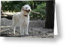 Labradoodle Holding Stick Greeting Card