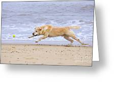 Labrador Dog Chasing Ball On Beach Greeting Card