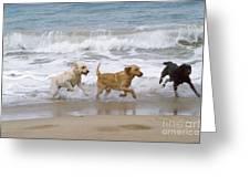 Labrador Dogs Running Greeting Card