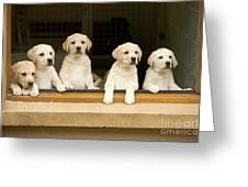 Labrador Puppies At Window Greeting Card