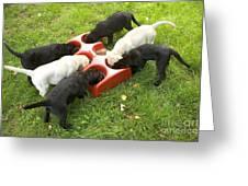 Labrador Puppies Eating Greeting Card