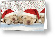 Labrador Puppy Dogs Wearing Christmas Greeting Card